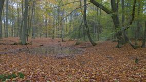 Camera panning over a colorful autumn forest. Landscape stock video