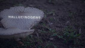 Camera pans to mushrooms with text - Hallucinogens