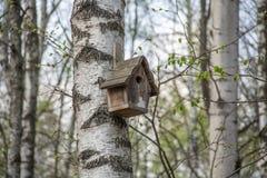 Camera per gli uccelli che appendono su un albero di betulla fotografia stock libera da diritti