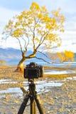 A camera pointing to the lone tree. Of Wanaka Stock Photos