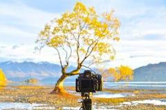 A camera pointing to the lone tree. Of Wanaka, New Zealand Stock Photo