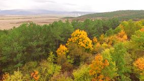 The camera rises and shows the boundary between the autumn yellow forest.