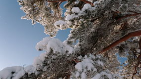 Camera rotates and removes the branch of a tree with snow and sky. stock video