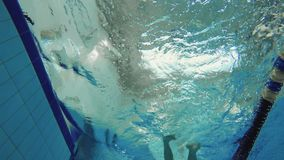 Underwater - man swims crawl stroke in swimming pool. The camera shoots from below. The camera is under water in the swimming pool. Young active sportsman swims stock video