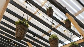 Camera Shows Cafe Ceiling Decorated with Live Plants stock video