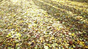 Camera sliding over meadow in autumn forest morning wind blowing fallen leaves stock video footage
