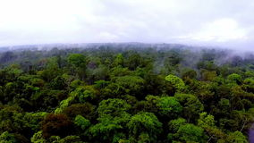 The camera slowly flying over the tree tops of the rainforest stock footage