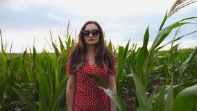 Camera slowly getting closer to beautiful young girl in red dress that straightening her long brown hair in corn field. Attractive woman in sunglasses standing stock video