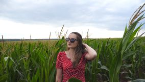 Camera slowly getting closer to beautiful young girl in red dress that straightening her long brown hair in corn field. Attractive woman in sunglasses standing stock footage