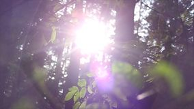 The rays of the Sun in the forest stock footage