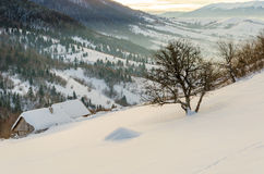 Camera su un pendio di collina coperto di neve e di alberi verdi sul Sid Fotografia Stock
