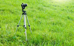 Camera and tripod stand on the grass. Nature photography - camera on tripod with remote in a field. Camera and tripod stand on the grass Royalty Free Stock Photos