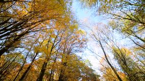 Camera view up. Autumn park with colorful beautiful trees, autumn yellow leaves on a sunny day. Camera view up. Autumn park with colorful beautiful trees stock video