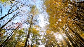 Camera view up. Autumn park with colorful beautiful trees, autumn yellow leaves on a sunny day. Camera view up. Autumn park with colorful beautiful trees stock footage