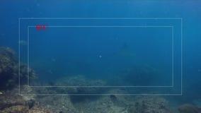 Camera Viewfinder Shot Of Graceful Leopard Shark Manta Ray & Eagle Ray In Blue Sea