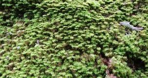 Camerabewegingen die van beneden naar boven de groene bladeren van de installaties in het bos van start gaan stock footage