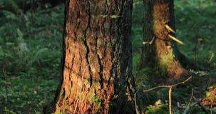 Camerabewegingen die van beneden naar boven een boom in het bos van start gaan stock video