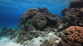 Cameraman diver swimming deep underwater in Red sea. Colorful coral on sandy bottom deep underwater in Red sea. World of colorful beautiful wildlife of reefs stock video footage