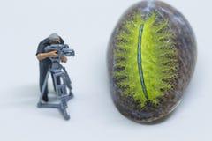 Cameraman miniature de poupée et chenille verte Videographer au travail tirant l'animal tropical photographie stock