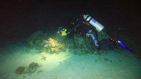 Cameraman shoots scorpionfish underwater on sandy bottom in Red sea. stock video footage