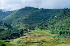 Camere degli agricoltori sopra la collina con le risaie Fotografie Stock