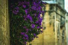 Camere tradizionali di architettura edifici maltesi tradizionali di Malta e destinati esotico del fondo di viaggio di concetto di Immagine Stock Libera da Diritti
