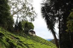 Cameron Highland stockbild