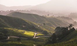Cameron Highland Foto de Stock Royalty Free