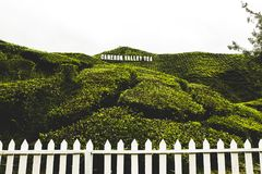 Cameron Highland admitido Cameron Valley Tea Plantation Foto de archivo