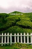 Cameron Highland contenuto Cameron Valley Tea Plantation Fotografie Stock