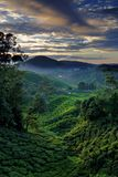 cameron highland dawn. Obrazy Royalty Free