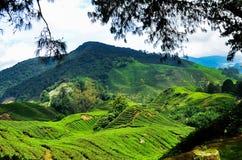 Cameron Highland ha individuato nel paesaggio della Malesia, attrazione turistica popolare per godere del freddo Immagini Stock