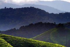 Cameron Highland, Malaysia Royalty Free Stock Photography