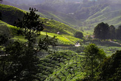 Cameron Highland, Malaysia Royalty Free Stock Photography