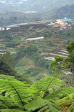 Cameron Highland, Malaysia Royalty Free Stock Images