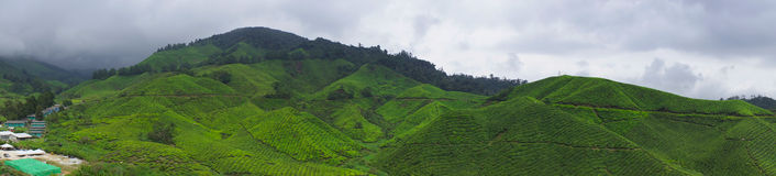 Cameron highland Royalty Free Stock Photography