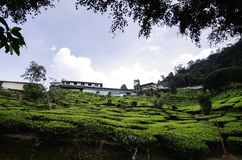 Cameron Highland tea plantation at sunny day.cloudy sky, bungalow on hill top Stock Photography