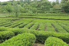 Cameron Highlands Royaltyfri Foto