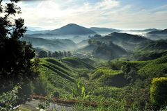 Cameron Highlands. The Cameron Highlands is one of Malaysia's most extensive hill stations. It covers an area of 712 square kilometres (275 sq mi). To the stock images