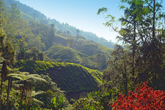Cameron Highlands Photos libres de droits