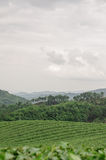 Cameron Highlands Stockbilder