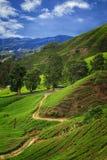 Cameron Highlands Images libres de droits