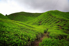 Cameron Highlands Photographie stock