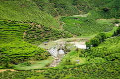 Cameron Highlands stock fotografie