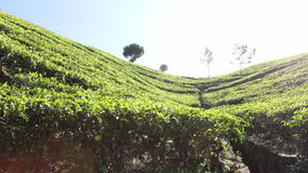 Cameron Highlands stock footage