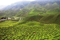 Cameron Highlands Stock Afbeelding