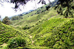 Cameron Highlands imagem de stock royalty free