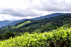 Cameron Highlands foto de stock