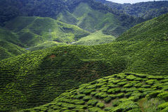Cameron Highlands Royaltyfria Bilder