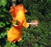 Cameron Highlands 015 Arkivbild